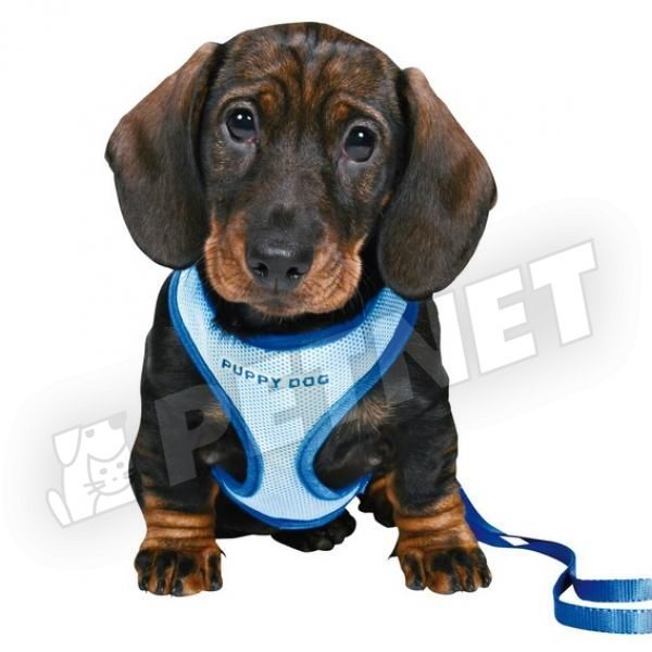Trixie Puppy Soft Hám pórázzal Kék 26-34cm