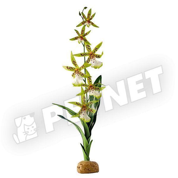 ExoTerra Rainforest Plant Spider Orchid 40cm