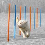Trixie Agility Slalom poles szlalom akadály 12db