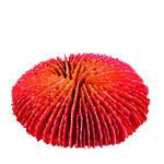 Trixie Kis Korall 04 10x10cm
