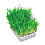 Trixie Cat SoftGrass BIO vitaminozott macskafű 100g