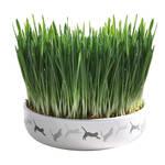 Trixie Cat Grass macskafű kerámiatálban 100g