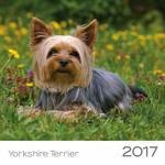 Trixie Yorkshire Terrier kutyás falinaptár 2017