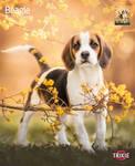 Trixie 2020 évi Beagle kutyás falinaptár