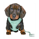 Trixie Puppy Soft Hám pórázzal Menta 26-34cm 10mm/2m