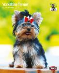 Trixie 2021 évi Yorkshire Terrier kutyás falinaptár