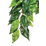 ExoTerra Jungle Plants Ficus M 42cm