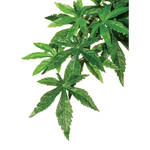 ExoTerra Jungle Plants Abutilon M 42cm