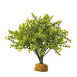 ExoTerra Rainforest Plant Boxwood Bush 28cm