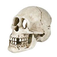 Trixie Skull Humán koponya 15cm