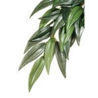 ExoTerra Jungle Plants Ruscus L 60cm